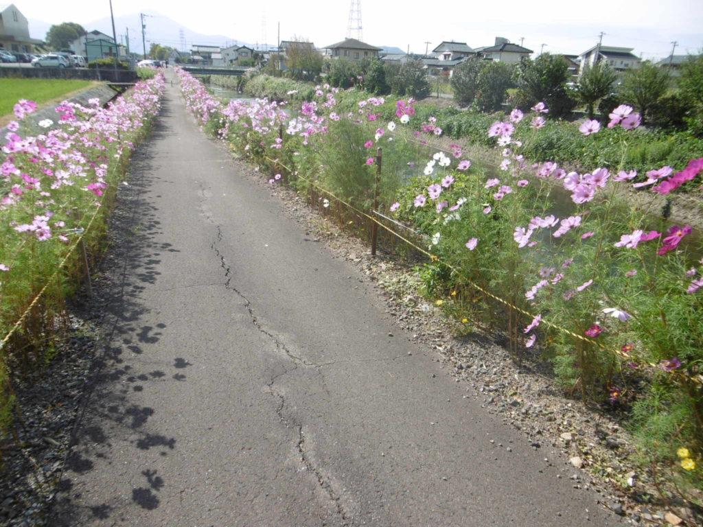 新横江コスモス